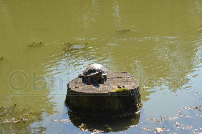 рыбалка в обнинске балабаново
